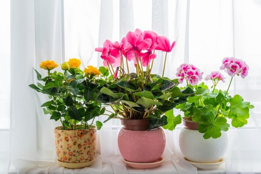 Цветов букет, сон про цветы в горшках