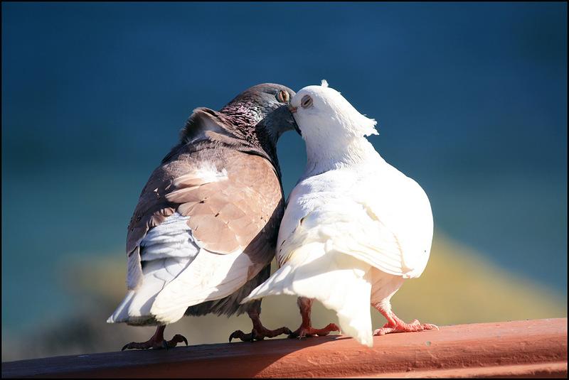 Открытки о любви и дружбе этом