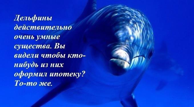 Дельфины картинки с надписью, про пару