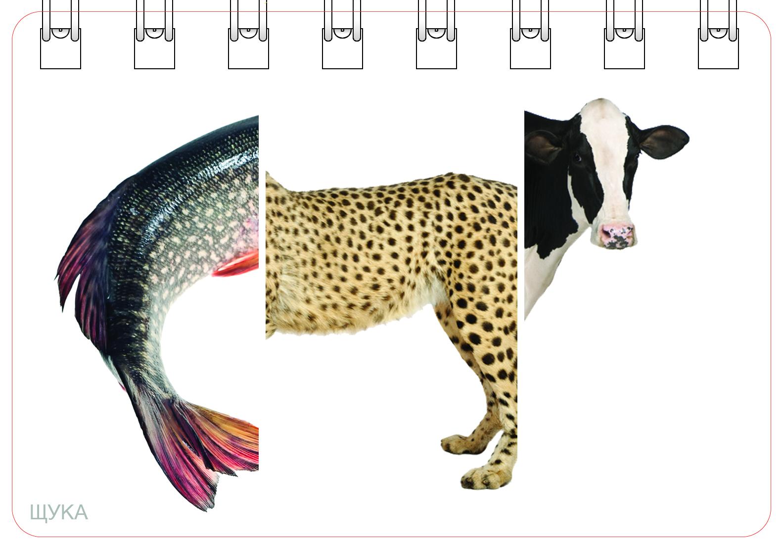Части тела животного в картинках для ребенка