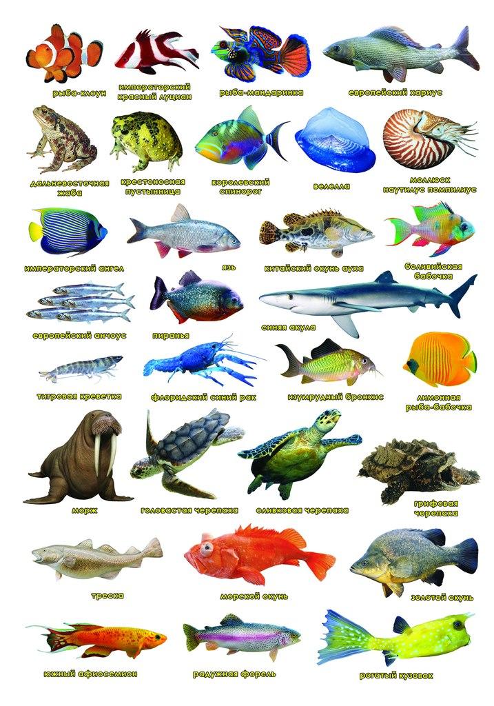 Картинки рыбки с названиями