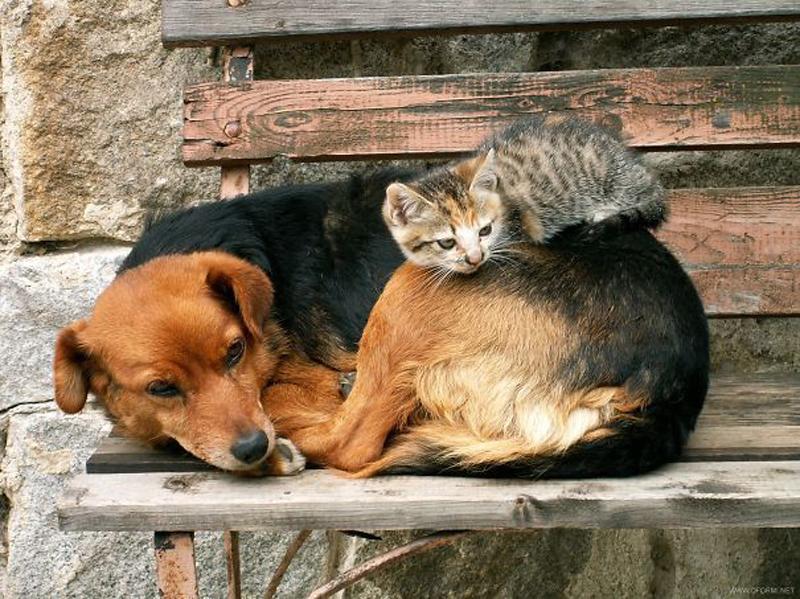 фотки кошек и собак бездомных воду закипания