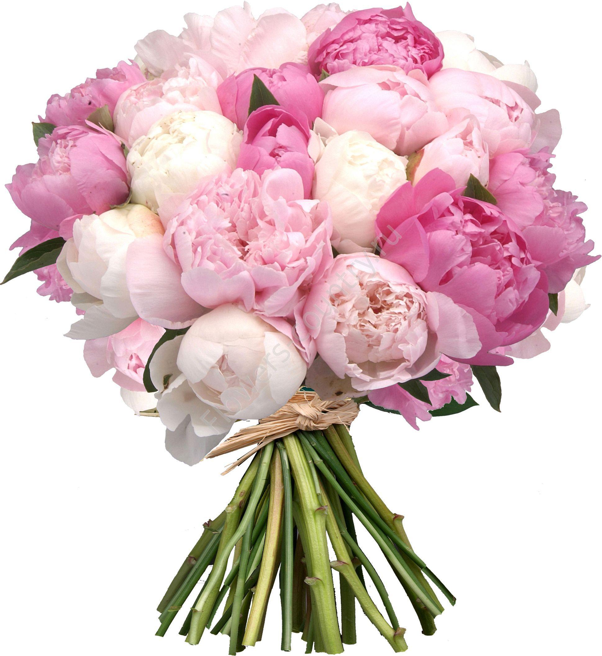 Картинка цветы пионы с днем рождения, день