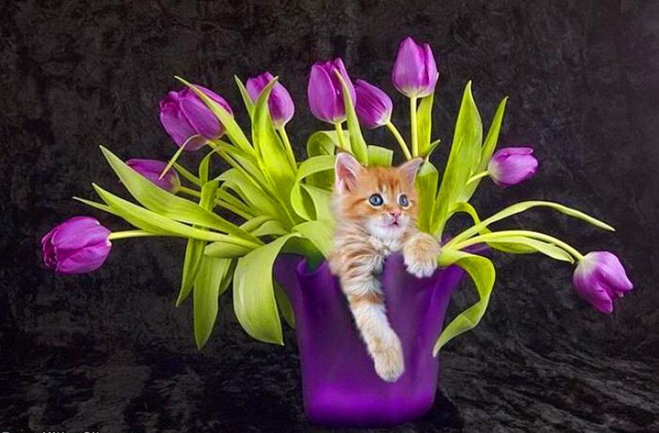 Смешные картинка с тюльпанами, ураза байрам азербайджанском