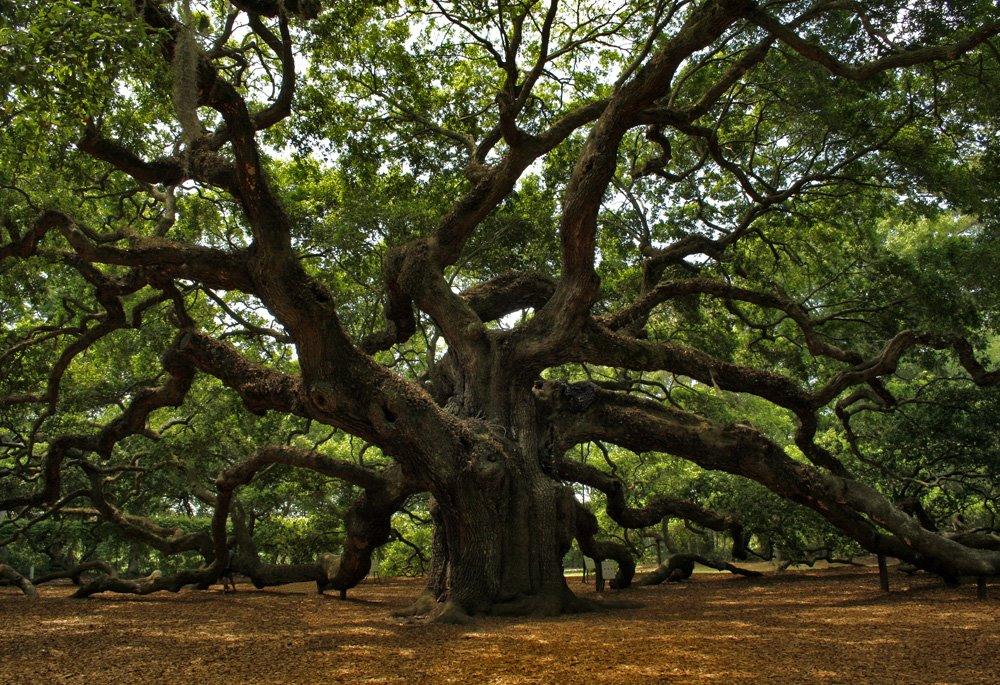 Панно из дерева картинки бесплатно скачивайте