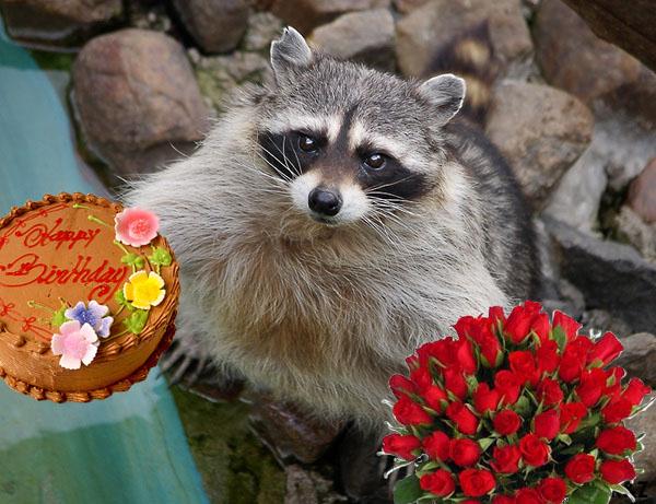 Класс, картинка с енотом и надписью с днем рождения