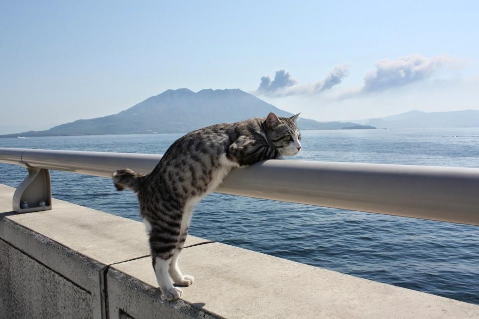Фото кота федота