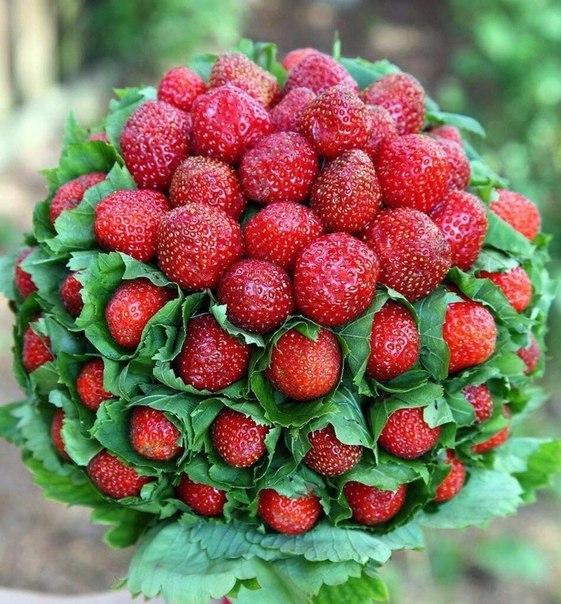 поздравления для ягоды тех, кто занимается