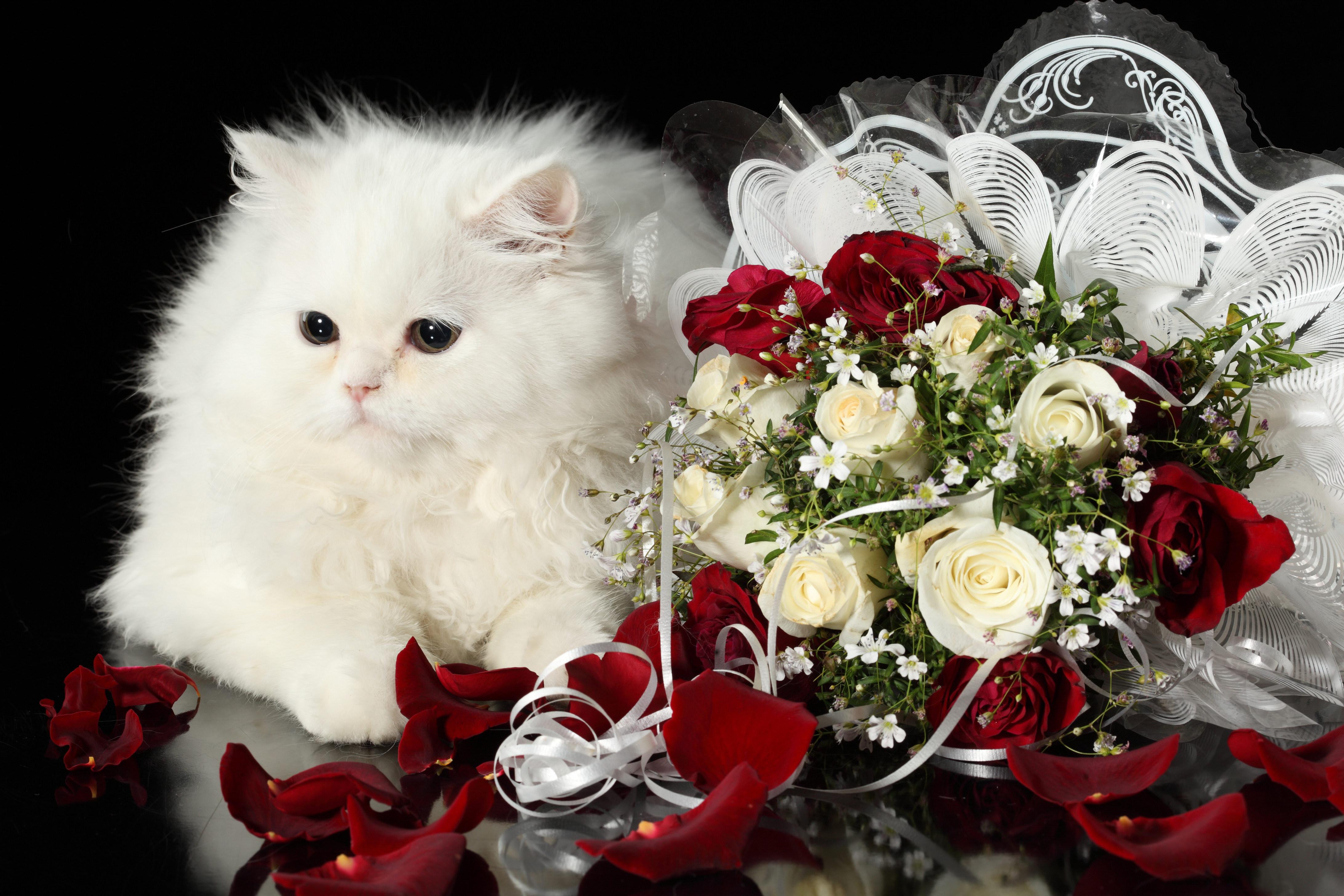 открытка с букетом роз с днем рождения для тебя