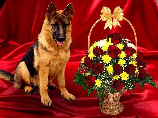 Поздравления с днем рождения женщине картинка с животными