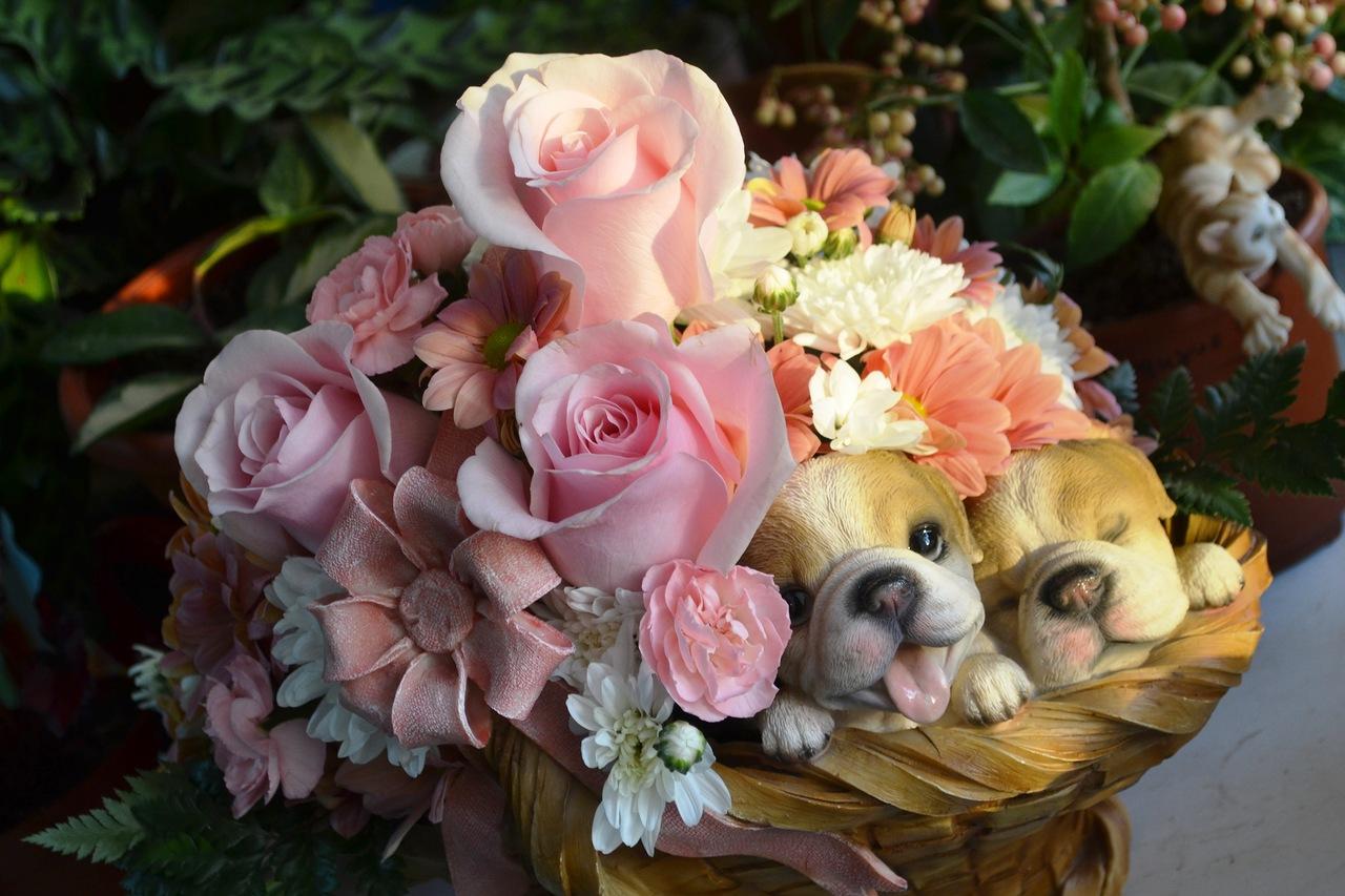 панган открытки чудесные розы кантемировки
