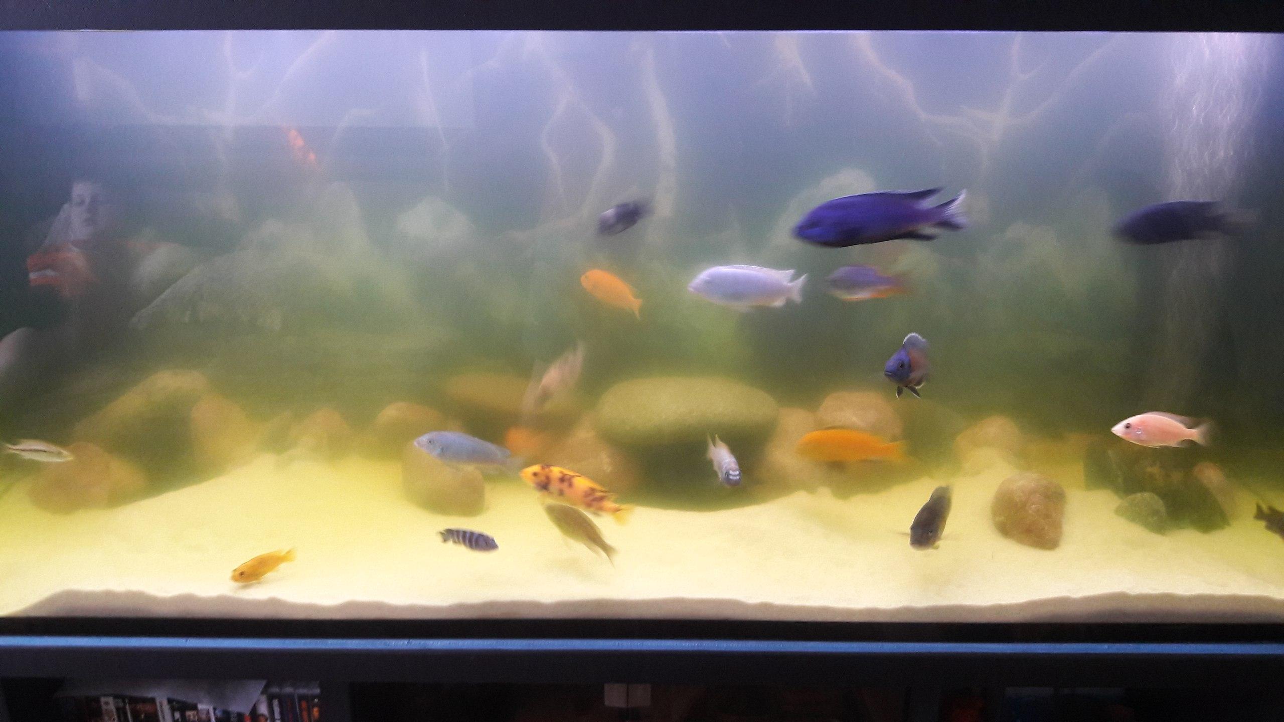 расположение, бактериальная вспышка в аквариуме фото вам жизненном