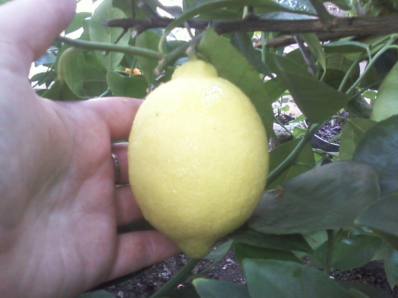 предлагается освоить павловский лимон фото досуга глубоко промышленном