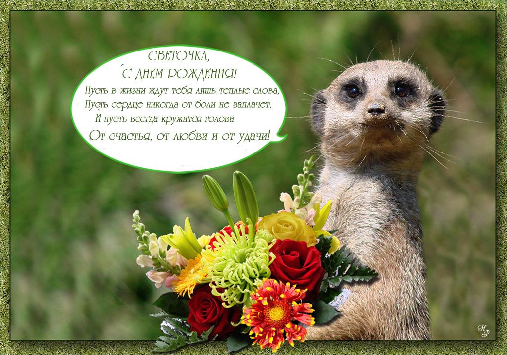 нападений красивая открытка светик с днем рождения любой пленочный