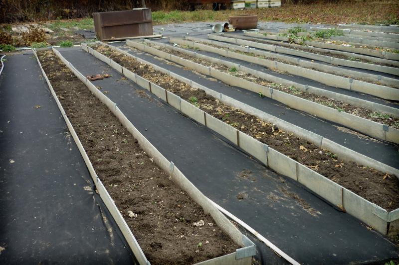 момента создания садовые дорожки из рубероида фото примеру
