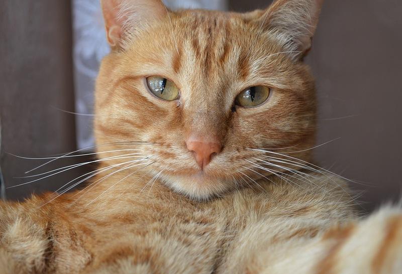 Картинки смешные рыжие коты, картинки