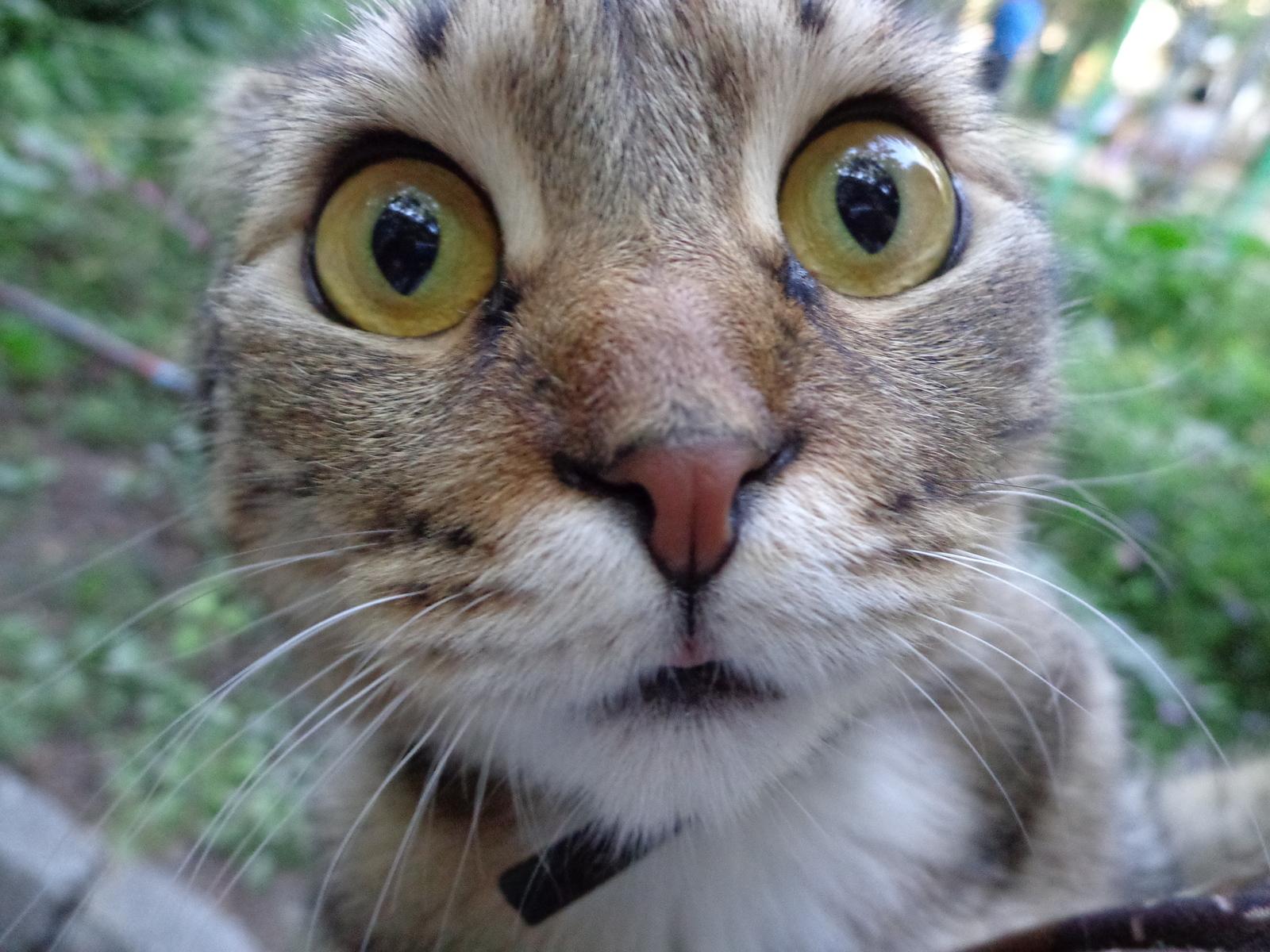 Прикол удивленный кот картинка