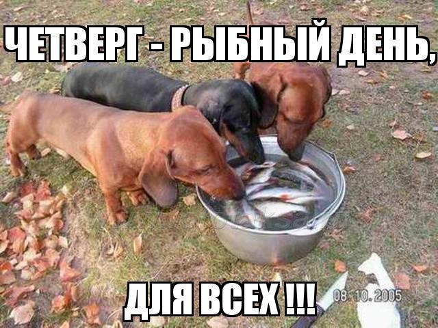Рыбный день картинки прикольные, красавицей открытки смешные