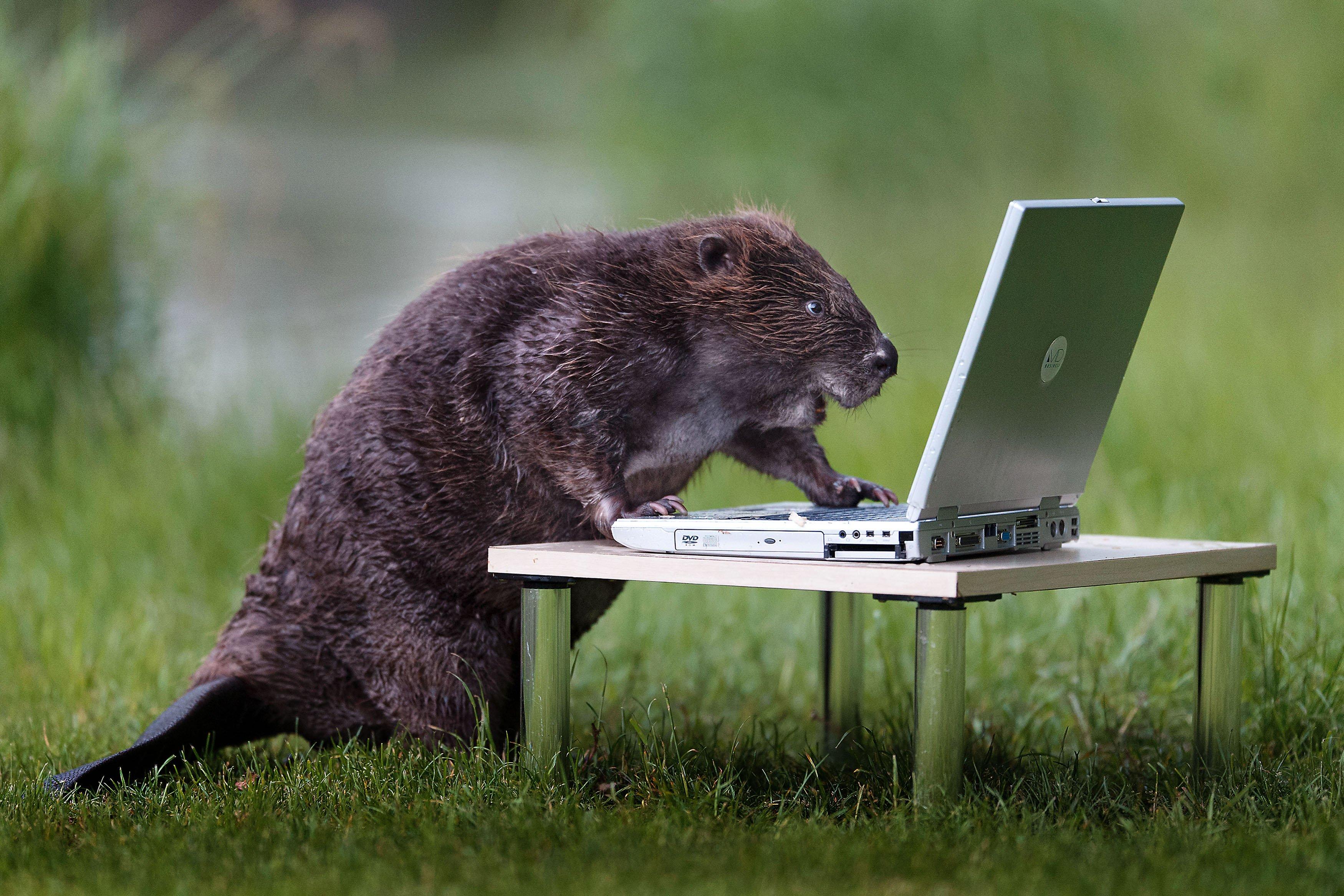 Картинки приколы работа с животными