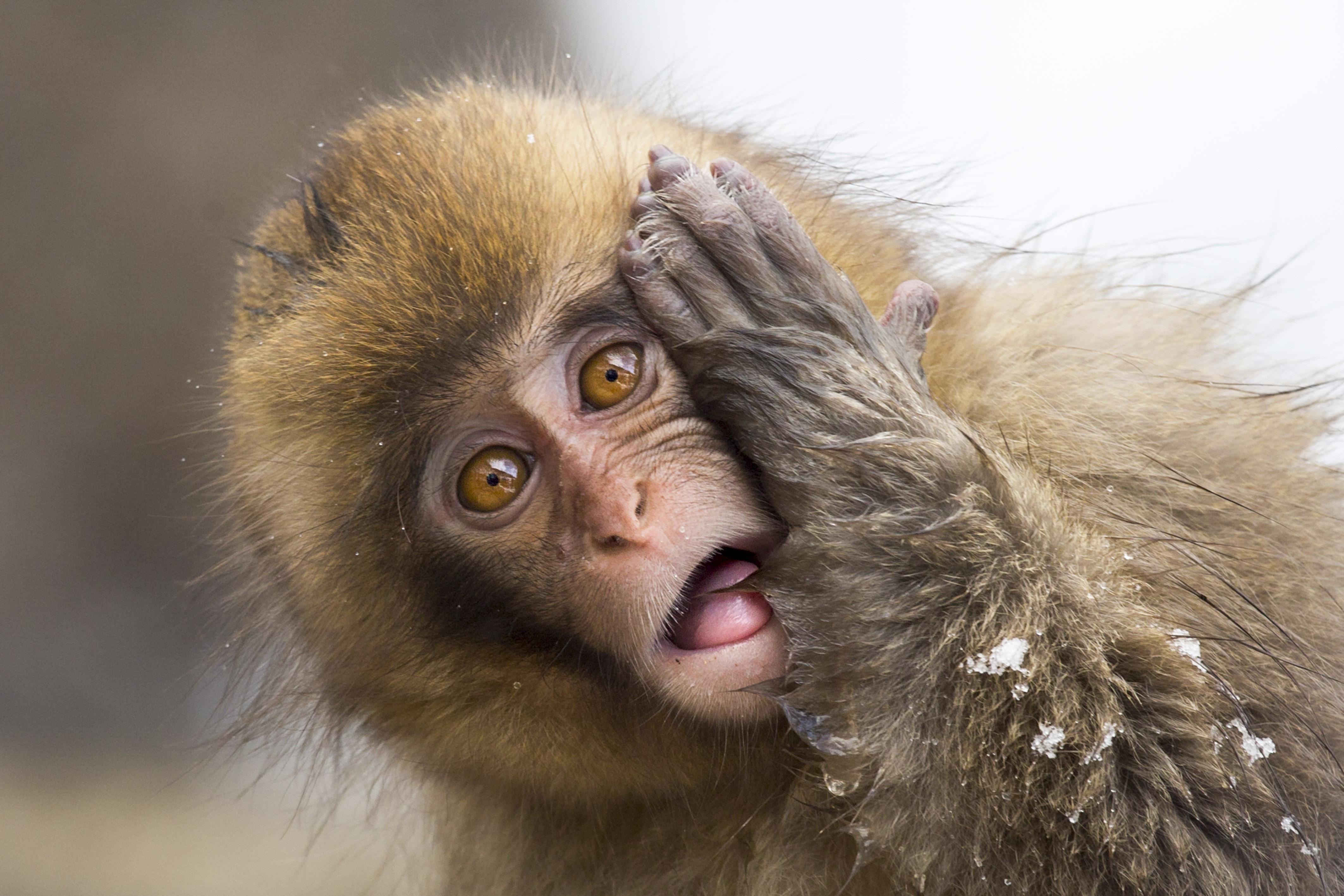смешные эмоции животных фото так важны