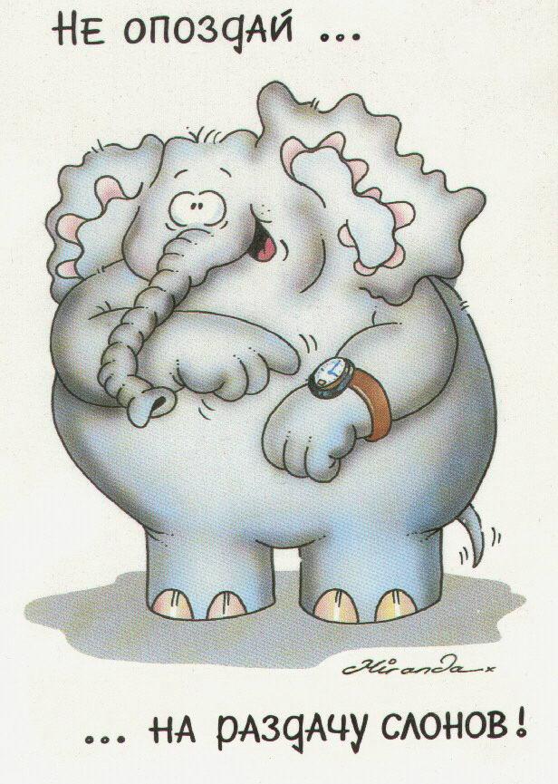 Ты мой слоник смешные картинки рабочем месте