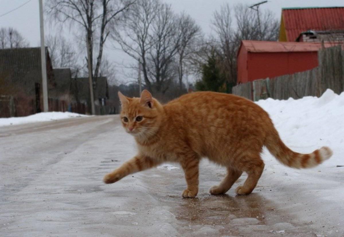 Кошка на льду картинки