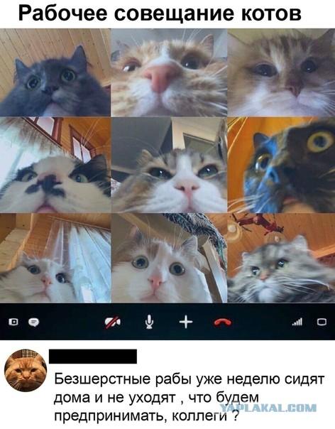 https://cstor.nn2.ru/forum/data/forum/images/2020-04/247773431-14205694.jpg