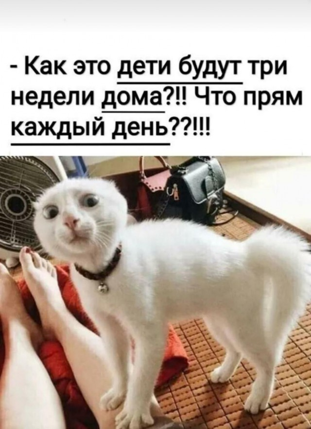 https://cstor.nn2.ru/forum/data/forum/images/2020-04/247773576-14172767.jpg