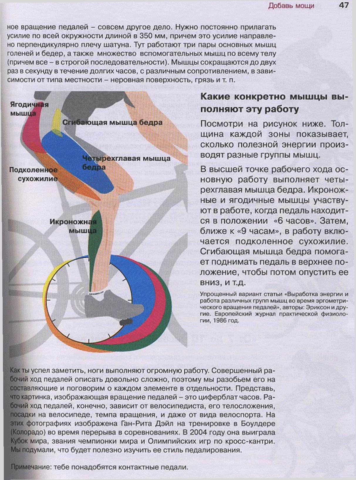 на какие мышцы влияет велотренажер картинки начинающие