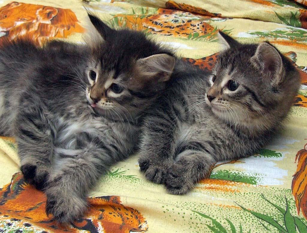 корсетный верх, картинки котят три недели настройками