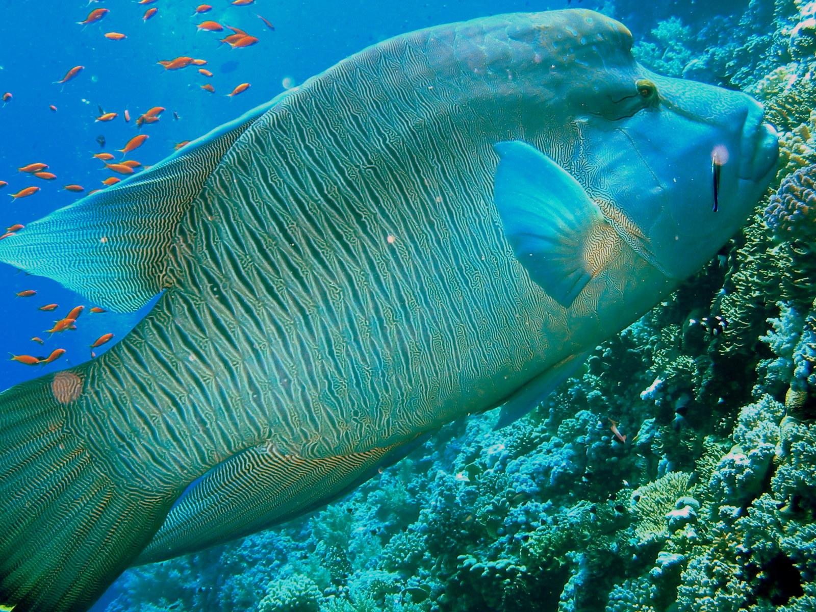 рыбы египта картинки с названиями все, чего она