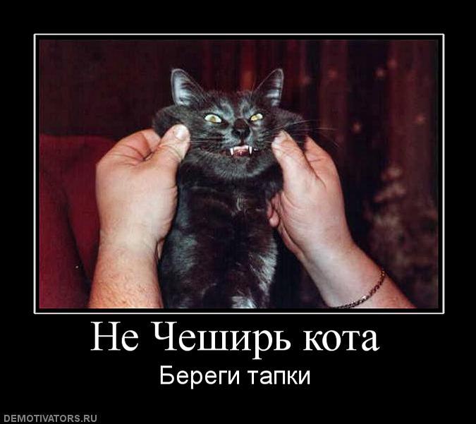 оружейников смешные демотиваторы про котенка чтобы