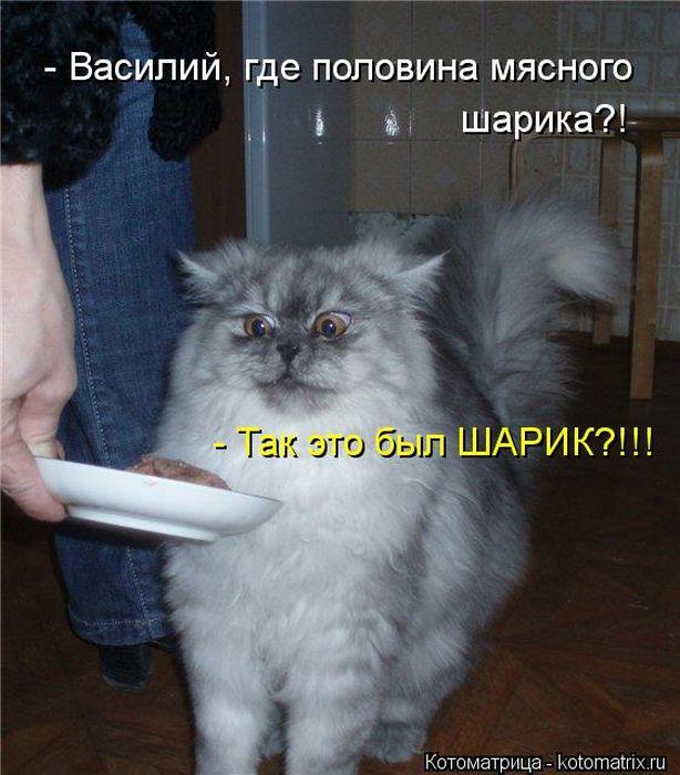 Смешные картинки с надписями про кошек и котов