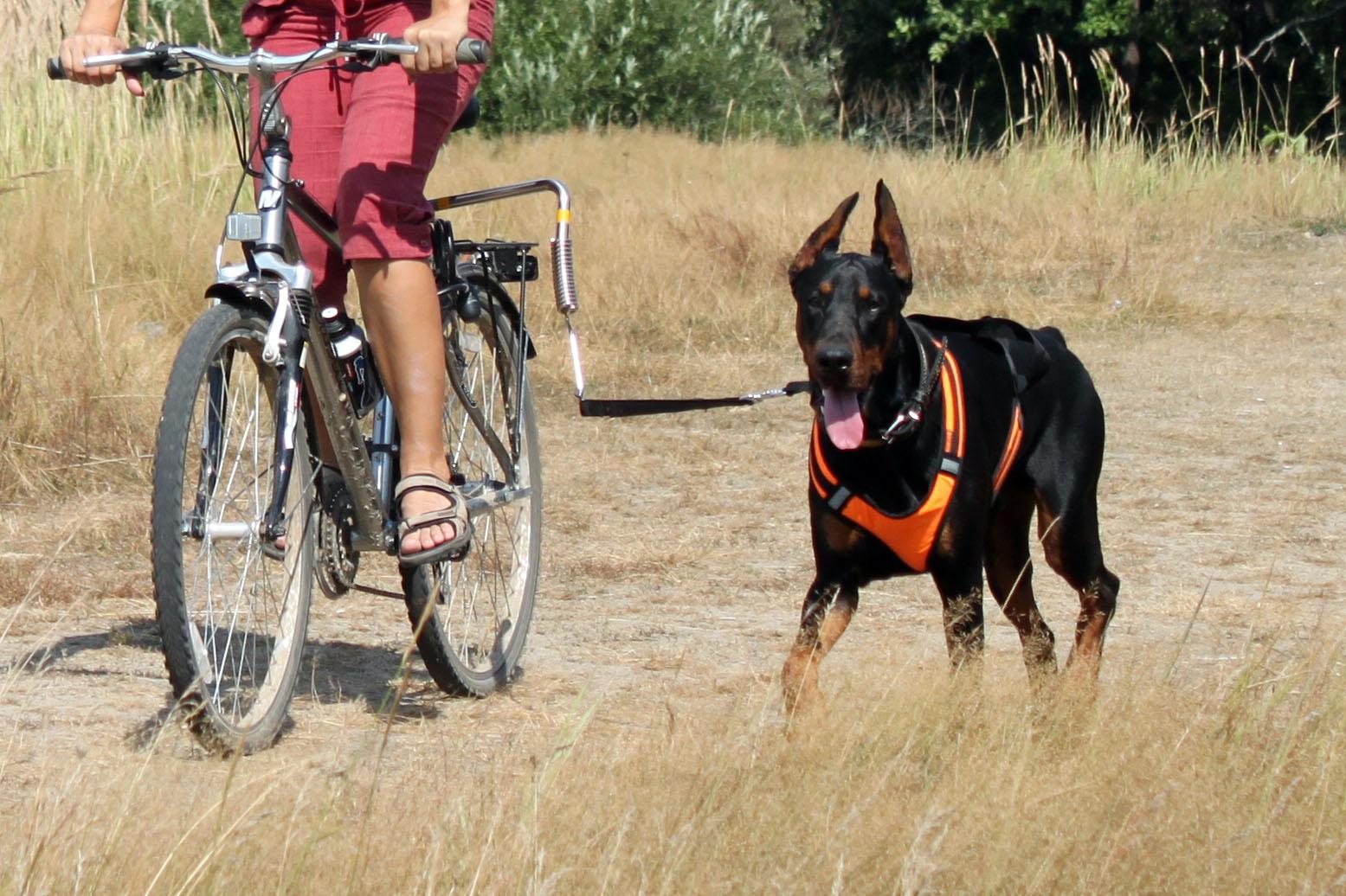 велоспрингер для собак купить в москве