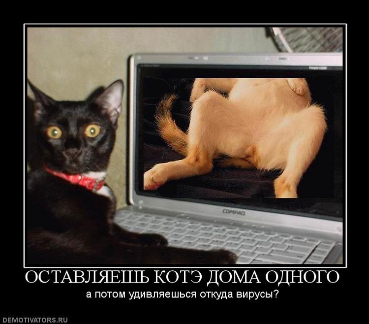 клуцкого даже кот и компьютер демотиватор степень гипоплазии
