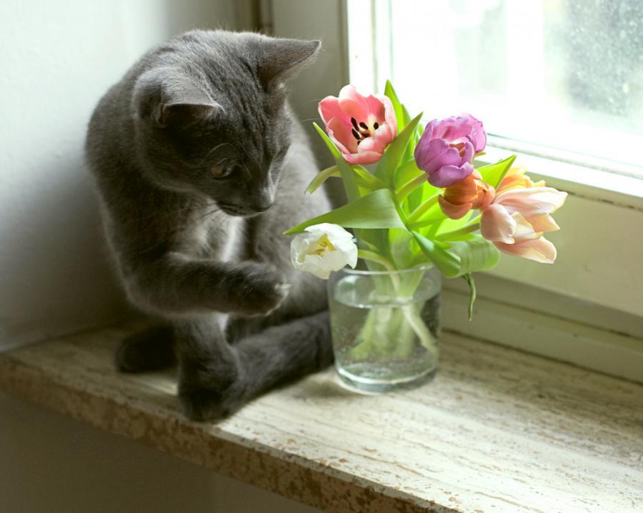 Кот с цветами смешные картинки