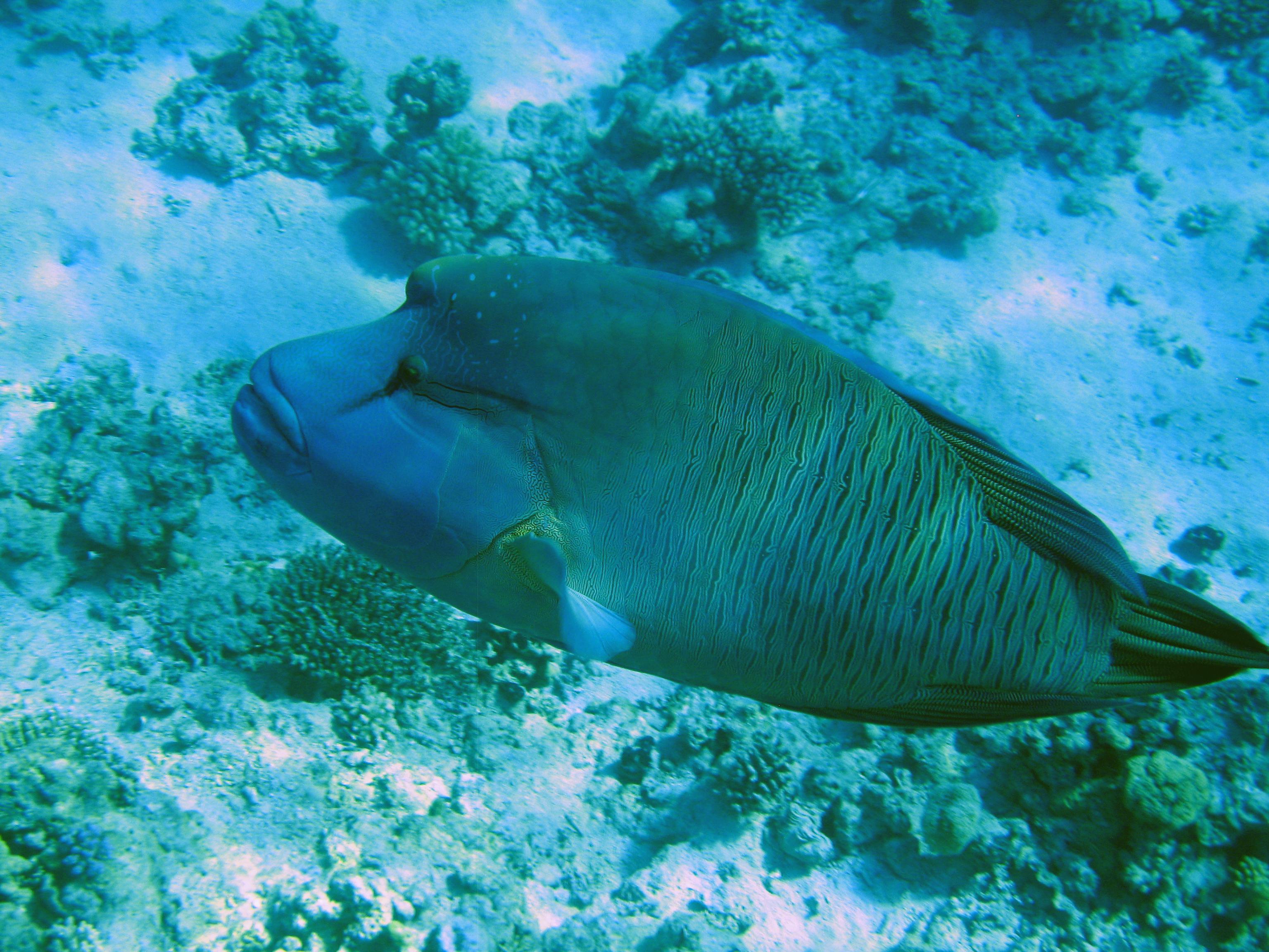 рыбы египта картинки с названиями хотя уединении