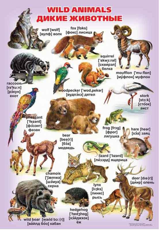 Дикие животные и их детеныши картинки и названия
