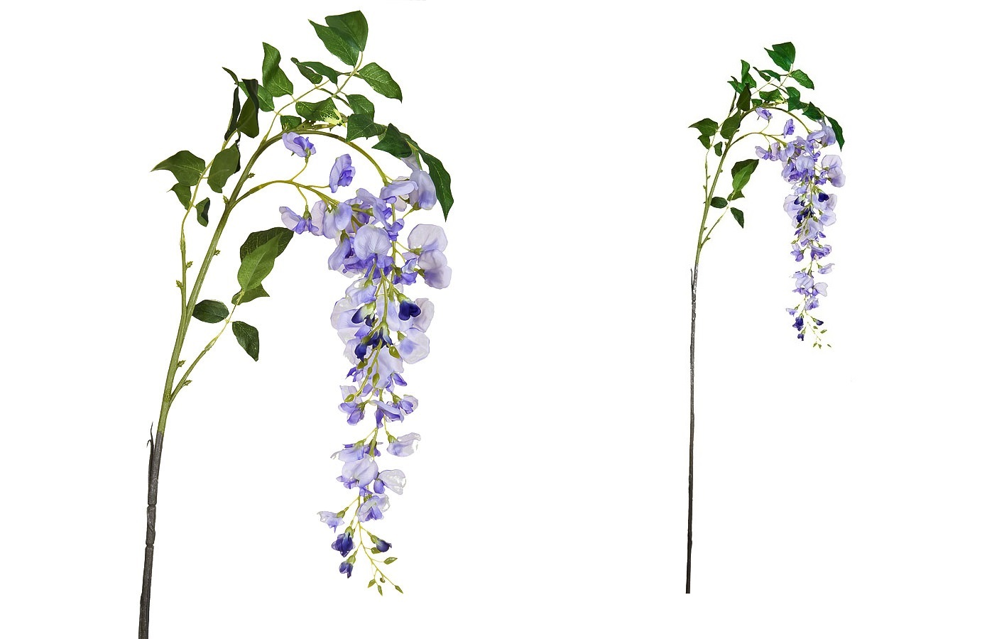 Магазин цветов глициния, фирмы цветы