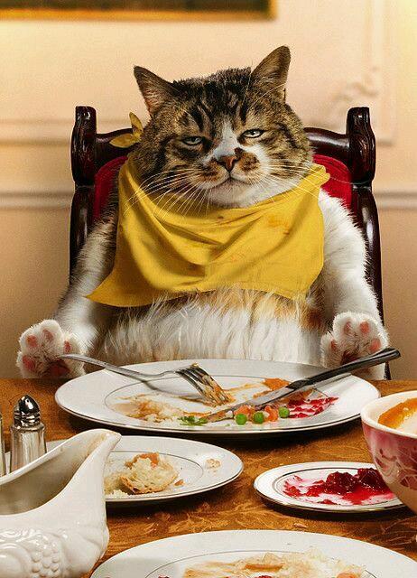 Смешные картинки где едят