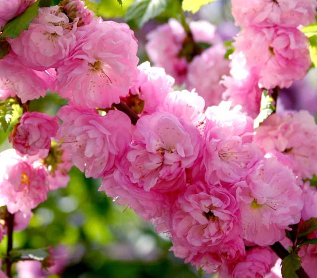 Картинки с надписью 1 день весны, любви