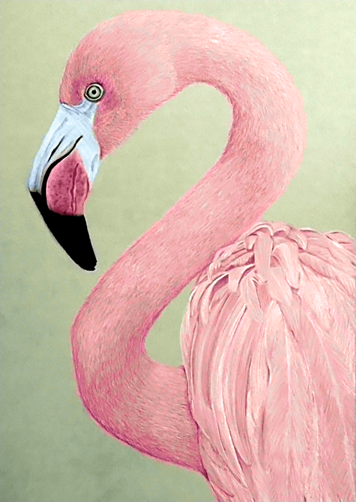 Прикольные розовый картинки, веселых картинках февраля
