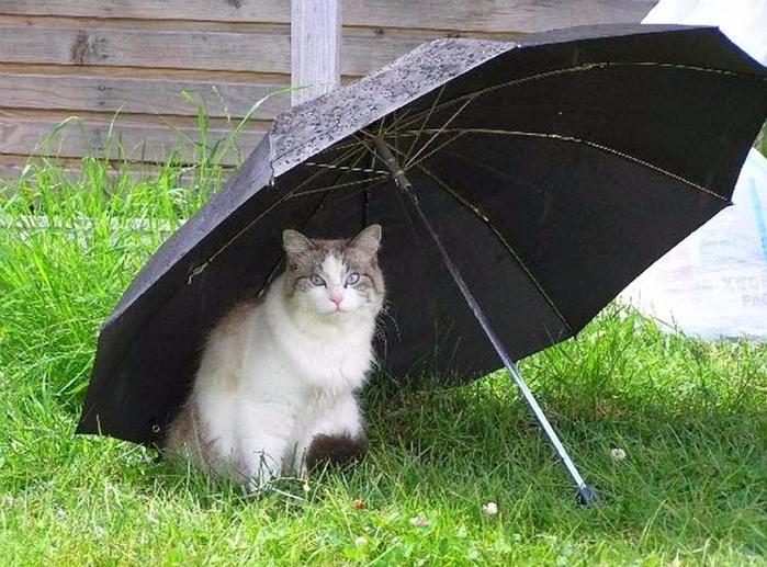 Зонт смешные картинки