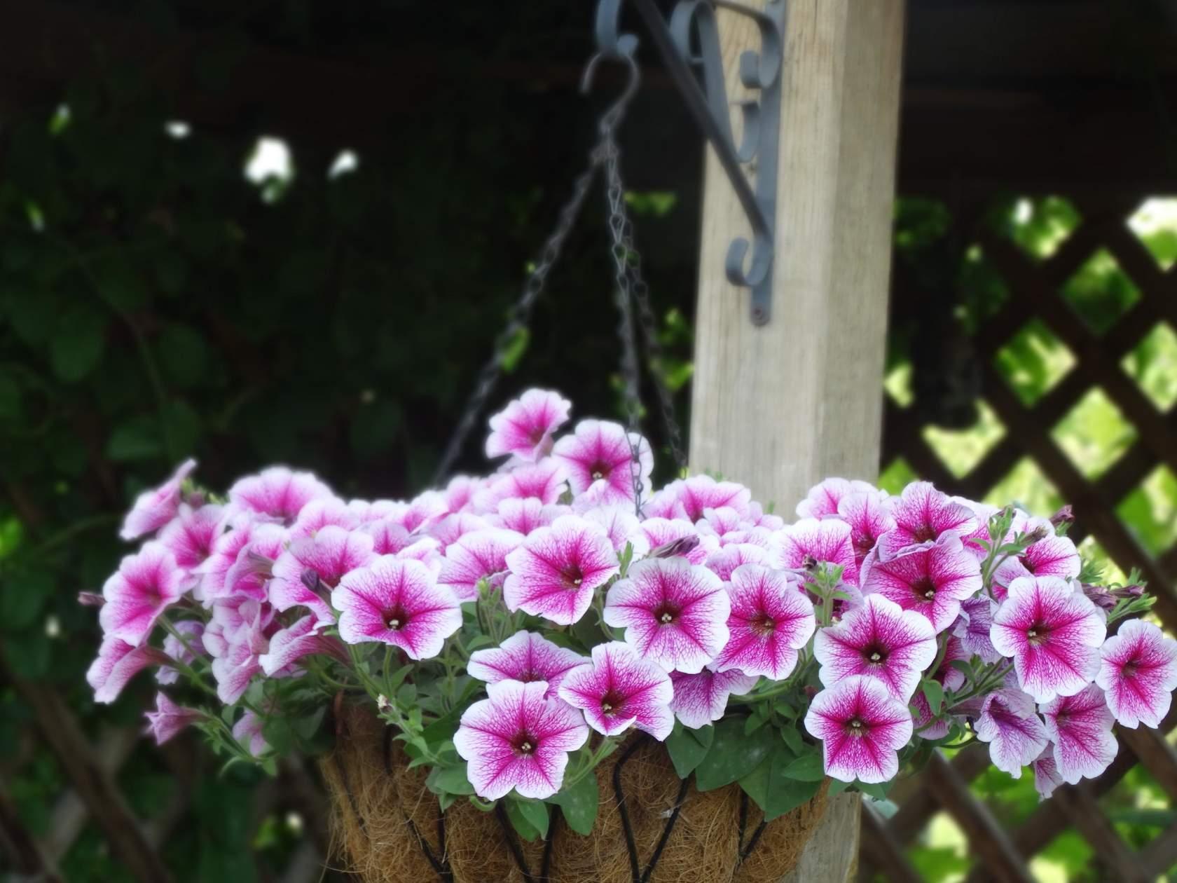 Фото алтайского заповедника душе, саду