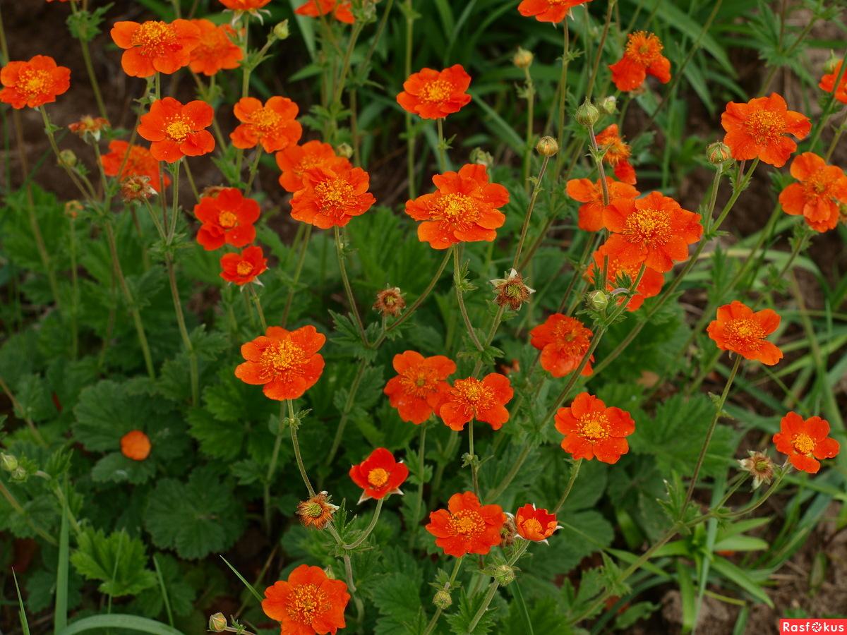 Цветы из шаров своими руками фото центральных садов